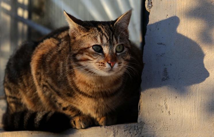 cat fire