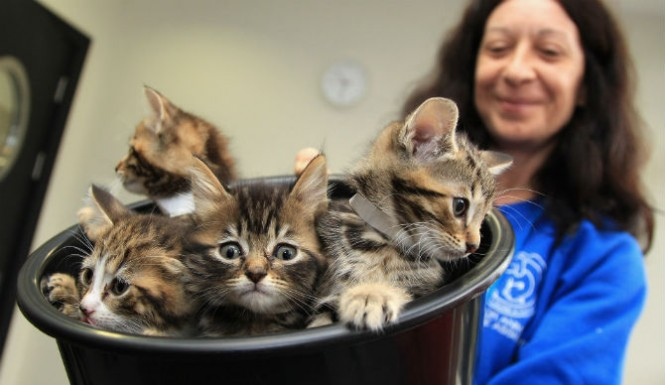 Animal Shelter Hatches Purr-Fect Idea For Rescued Cats
