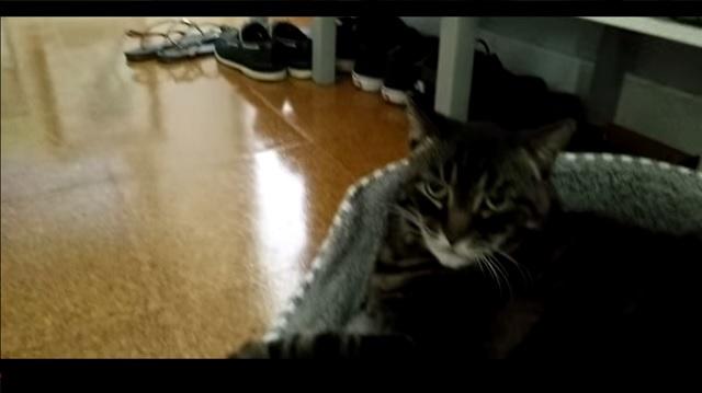 cat not impressed