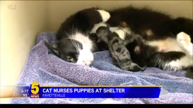 A Shelter Cat Nurses Abandoned Newborn Puppies