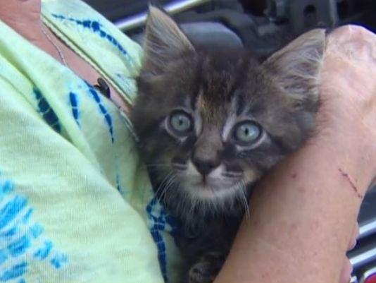 Kitten Survives Texas Flooding Under the Hood of a Woman's Car