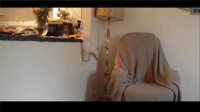 kitten hanging