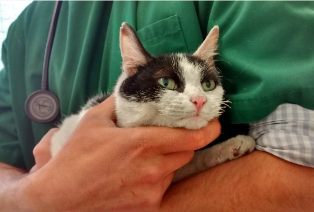 Having Survived for a Week, Three-legged Cat found in Fire-Damaged Apartment