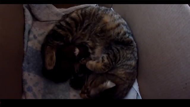 Cat's Reaction To A Newborn Puppy Shows What Motherly Instincts Are All About