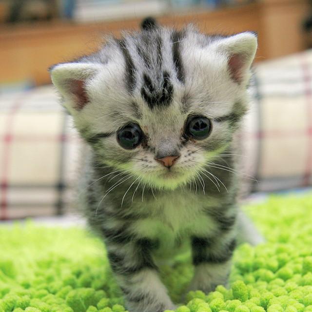 Is Tabby Cat Luhu The Saddest Cat on the Internet?