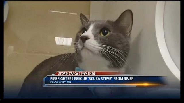Cat is Rescued after Viciously Being Thrown into a River