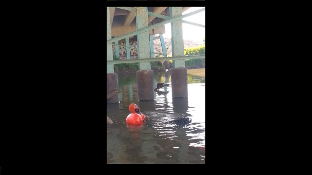 Scuba Steve the Cat Survives Being Thrown From a Car Into Flood Waters