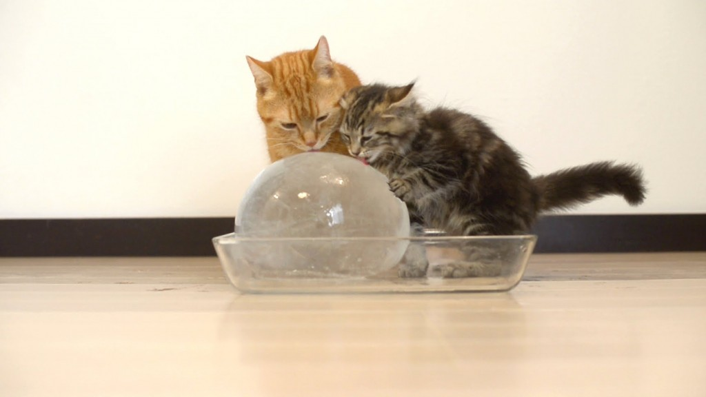 10 Cats Cool Off on a Giant Ice Ball