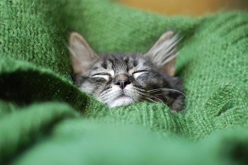 20 Kitties Who Look Adorable with Sweaters On