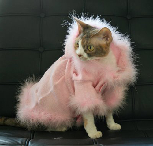 sweater cat: I'-ve never seen a cat who would pose for a pic ...