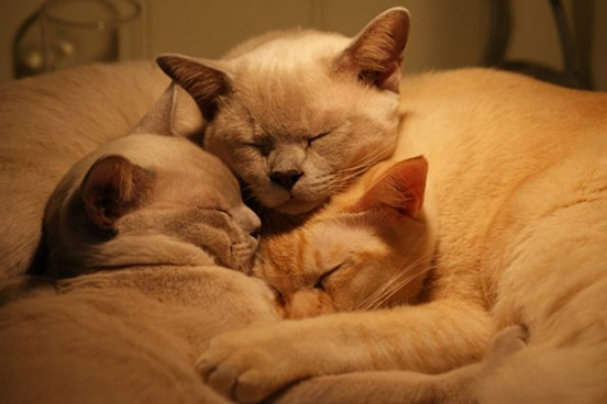 20 Adorable Pictures of Kittens Hugging Each Other