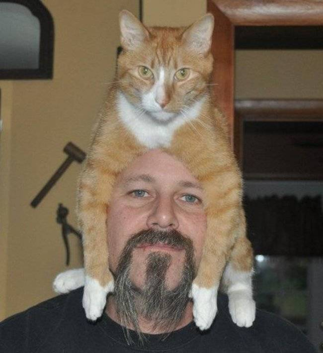 20 Kittens Lying on Top of Their Owners Heads