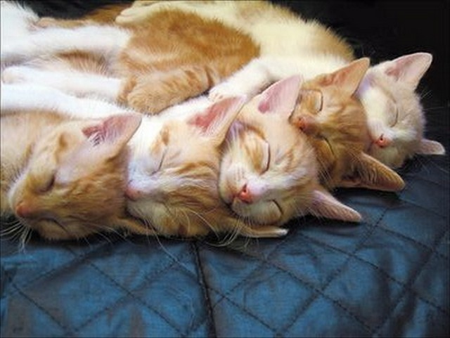 Is There Anything Cuter Than a Napping Kitten?