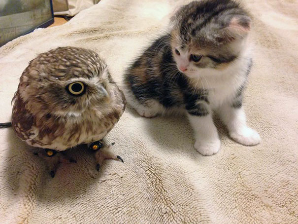 owl and cat 2