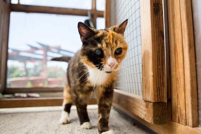 Let's Help Britain's Oldest Rescue Cat Find a Home Despite Those Terrifying Eyes