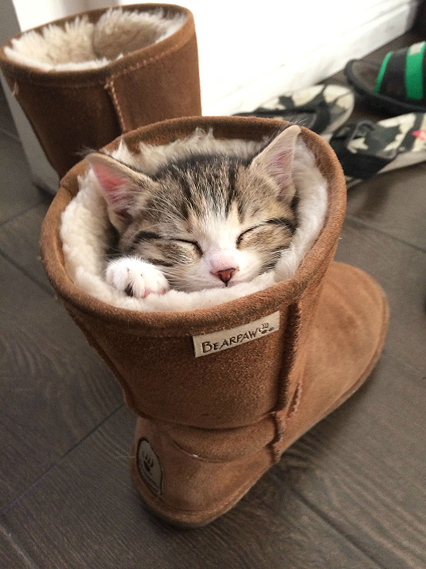10 Absolutely Adorable Sleeping Kitten Pictures