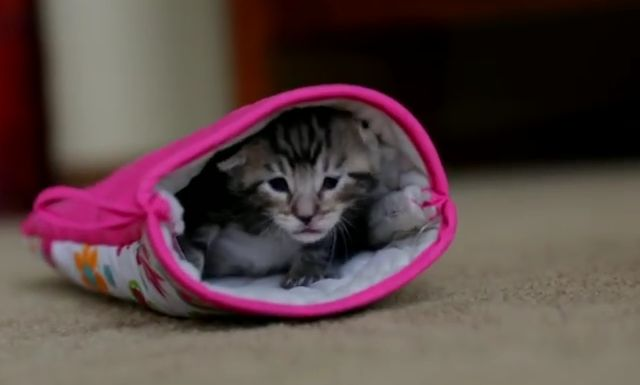 Kitten Finds a Kitchen Mitt And Uses It As The Cutest Sleeping Bag Ever