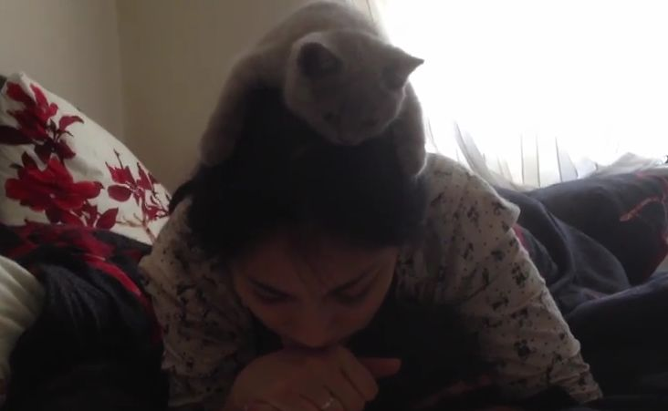 This is What Happens When You Tell Your Cat Not to Read Over Your Shoulder