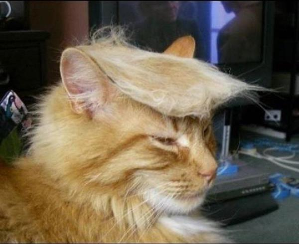 Check Out These Cats Showing Off Their Donald Trump Hairstyles on #TrumpYourCat Day