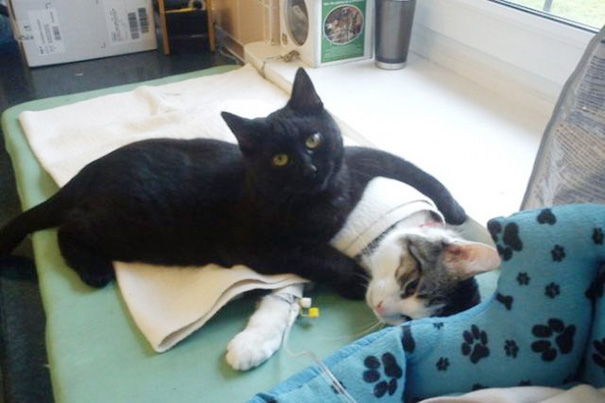 Cat's Second Chance At Life Is Used To Nurse Sick Cats Back To Health