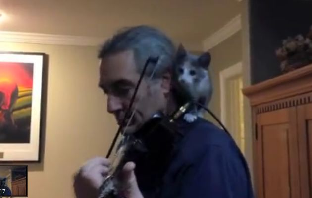 Watch This Kitten Help His Owner Play the Violin