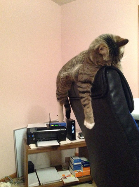 20 Hilarious Pictures of Cats Sitting on Chairs