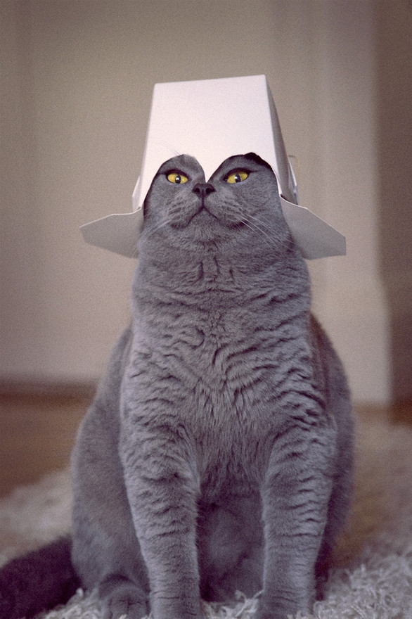 20 Silly Cats Wearing Hats