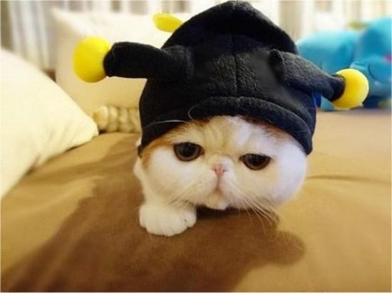 """Résultat de recherche d'images pour """"cat in silly hat picture"""""""