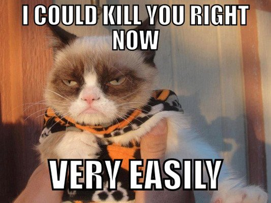 81 10 of the funniest grumpy cat memes