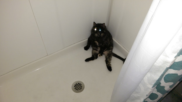 The Funny Stuff Cats Do When You're Taking a Shower