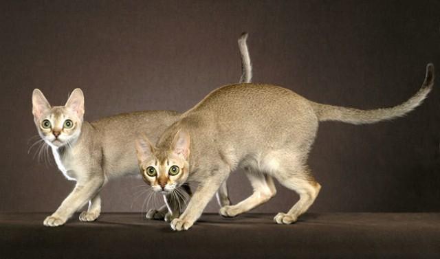 fat cat cracker squishy