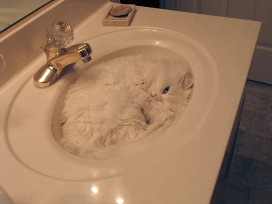 20 Cats Who Found Perfect Hiding Spots