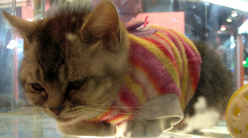 20 Cats Wearing Adorable Sweaters