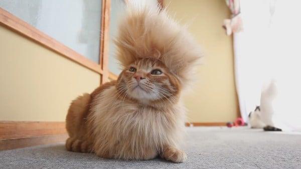 Do You Trim Cats Hair