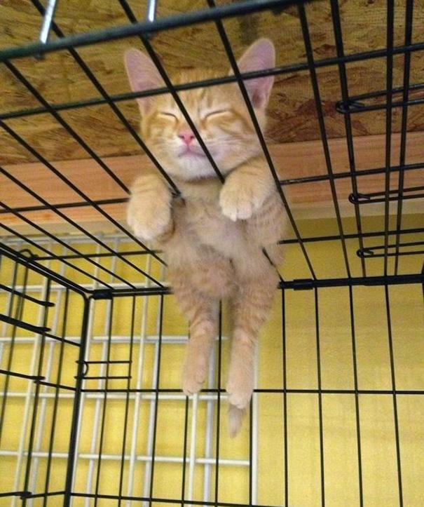 weatherproof cat houses
