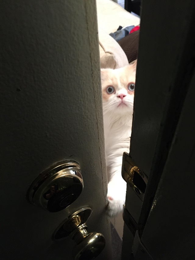 """Cat Puts On the Sad """"Don't Leave Me"""" Face Every Time Daddy Leaves For Work"""