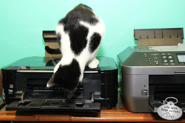 What's the Deal With Cats and Printers?