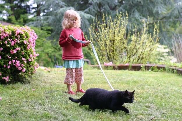 10 tips for walking your cat on a leash. Black Bedroom Furniture Sets. Home Design Ideas