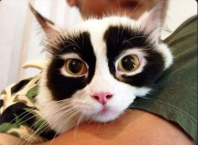 http://kittentoob.com/wp-content/uploads/2016/01/racoon-cat-640x471.jpg