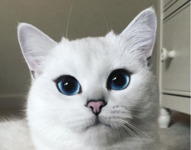 Pretty Cat With Blue Eyes
