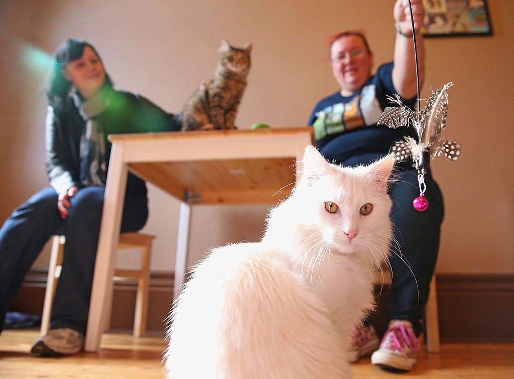 Atlanta is Getting its Very First Cat Cafe This Summer