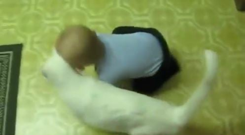 Watch Babies and Cats Together Showing Their Love