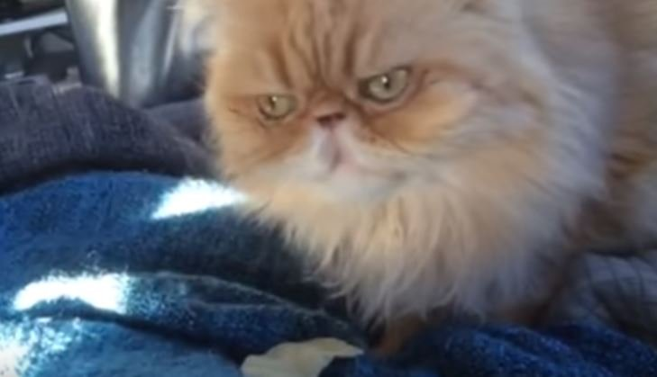 Watch This Cat Realize Potato Chips are Delicious