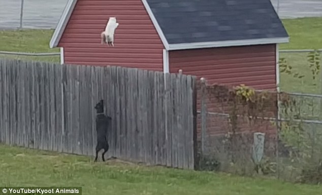 """Watch the Cat That Epitomizes the Song """"I Believe I Can Fly"""""""