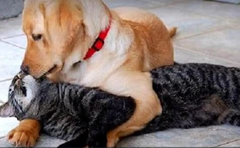 Dogs and Cats As Friends Is Amazing