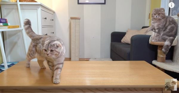 Cats and Robot Fish Are Hilarious to Watch