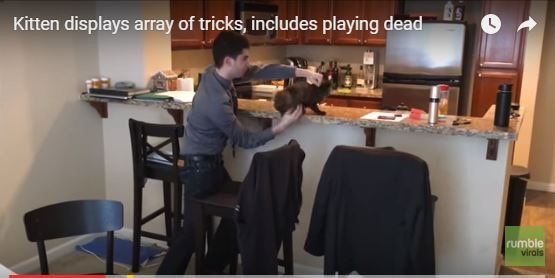 It Turns Out You Can Teach A Kitten New Tricks