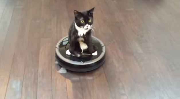 Kitten With Two Legs Gets Creative Getting Around