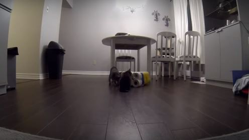 Spy Camera Catches Guilty Cats Making a Huge Mess