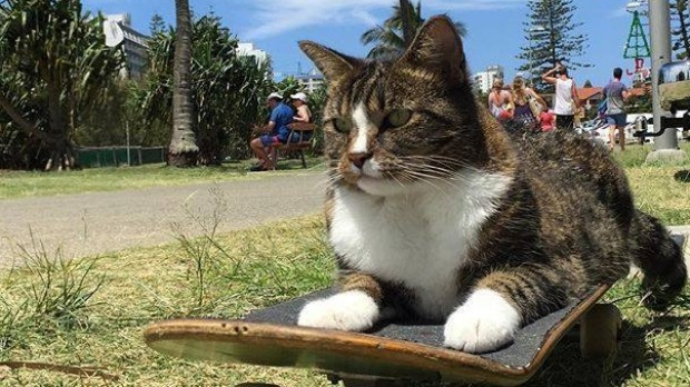 Watch This Rescue Cat Skate Her Way Right Into Your Heart